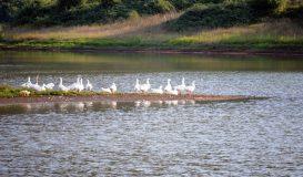 Anatre Lago di Canterno