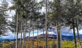 Veroli tra gli alberi